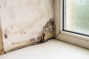 How to Prevent Mold Problems in Your Home